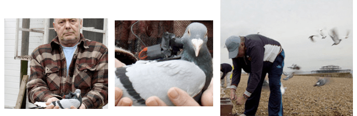 Pigeon Racing film Victoria Melody